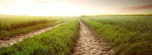 Header-Field-Grass